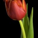 Цветя 20