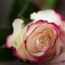 Цветя 12