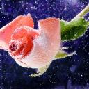 Цветя 13