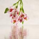 Цветя 3