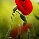 Цветя 28