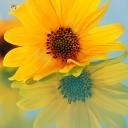 Цветя 22