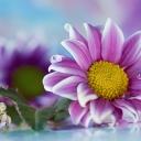 Цветя 15