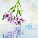 Цветя 5