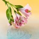 Цветя 2