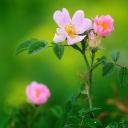 Цветя 27