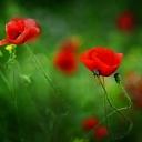 Цветя 23